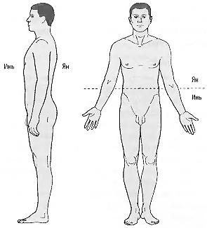 ИНЬ-ЯН да построение тела